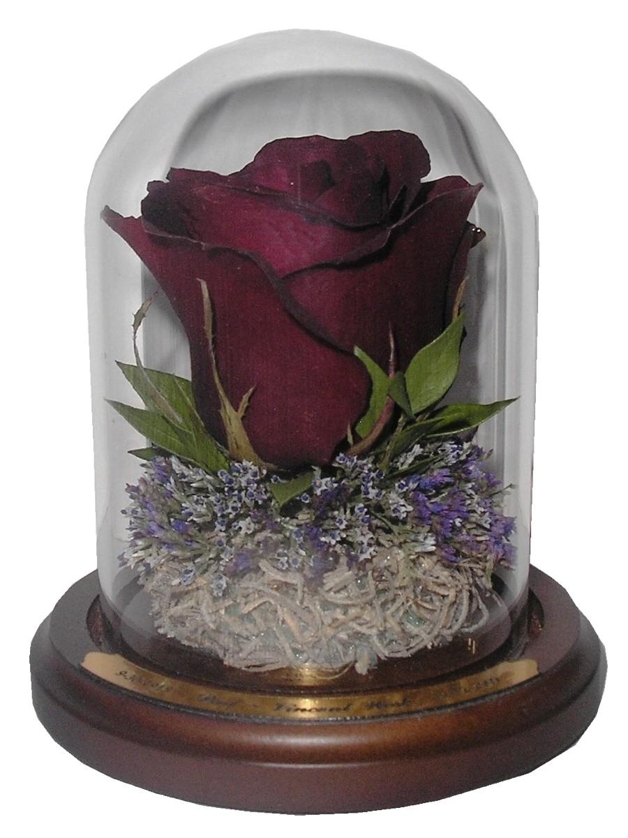 Encasement suspended in time page 2 bridal bouquet izmirmasajfo